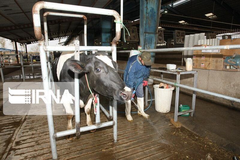 خبرنگاران کاهش قیمت شیر در خراسان شمالی به علت کرونا