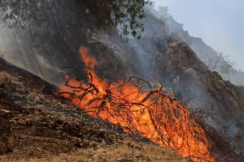 دستگیری 40 متهم آتش سوزی جنگل های زاگرس