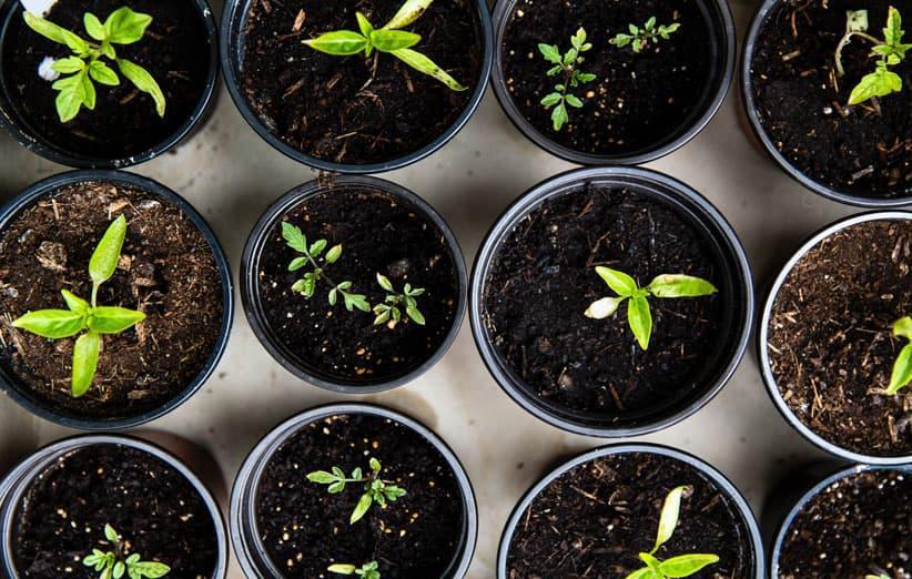 راهنمای کامل کاشت انواع سبزیجات در خانه و آپارتمان